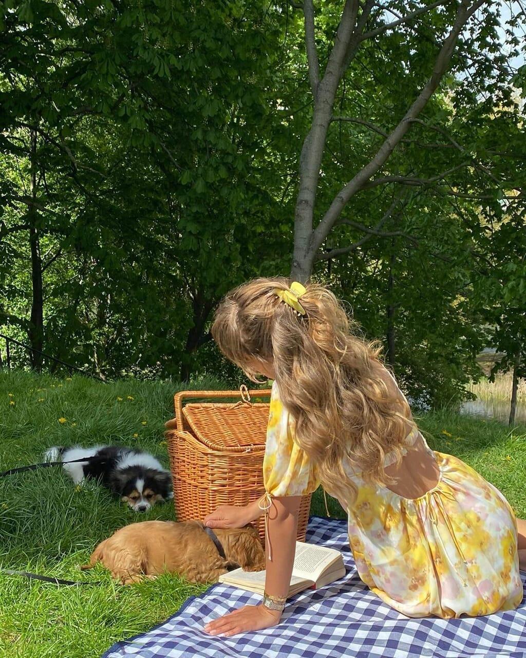 dog, picnic, and animal image