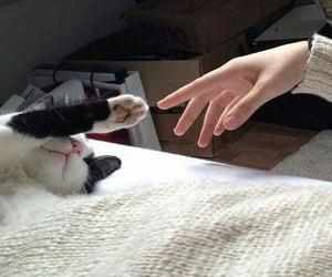 кот, рука, and дружба image