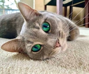 cat, gato, and green eyes image