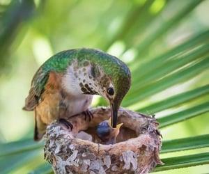 colibri, nest, and humming birds image