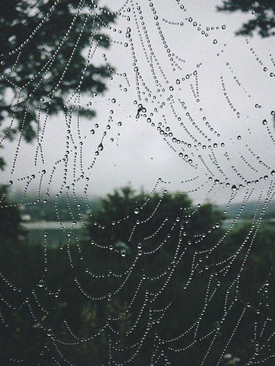 beautiful, cobweb, and delicate image