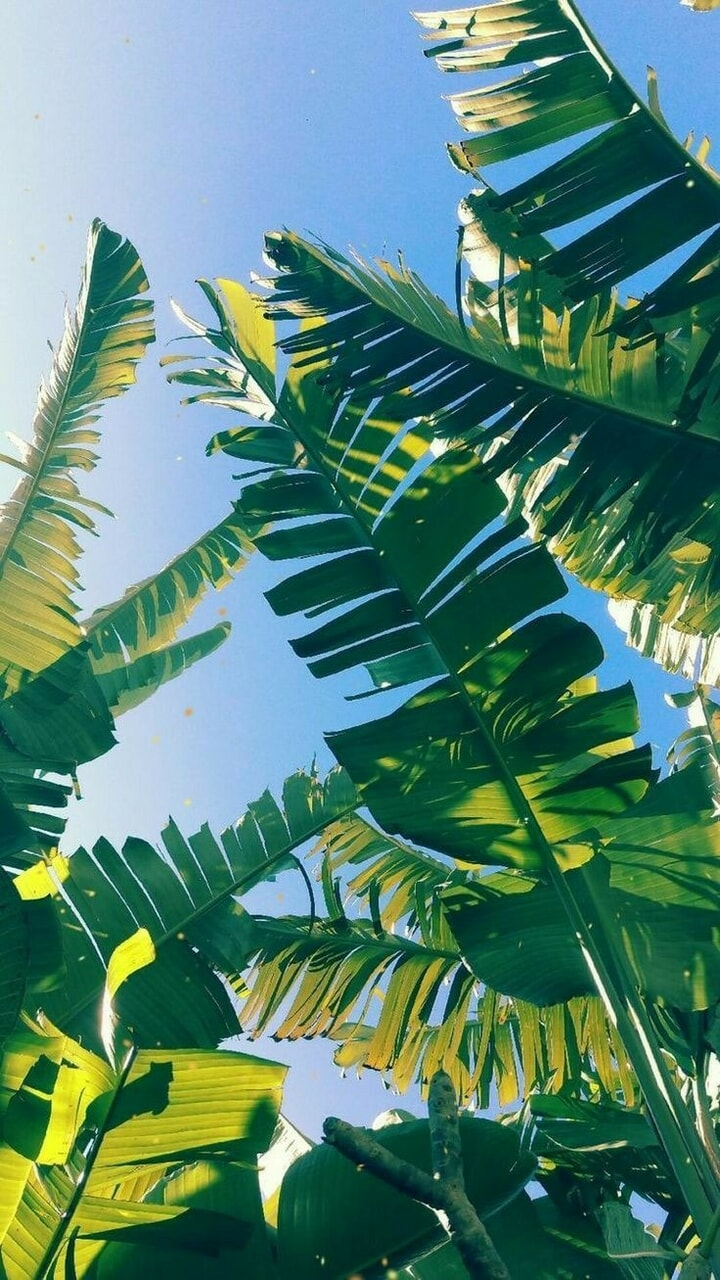 green, blue, and leaves image