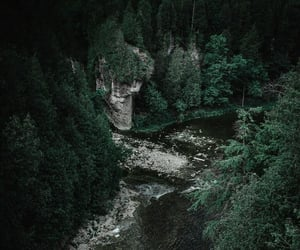 dark, evergreen, and forest image