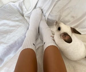 aesthetic, Chinchilla, and friend image