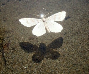 butterfly, aesthetic, and white image