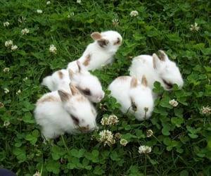 bunny, rabbit, and green image