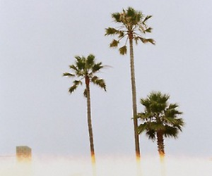 palm trees, summer, and photography image
