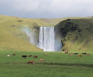 nature, waterfall, and cows image