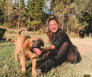 Animais, dog, and dogs image