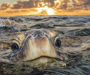 ocean sea turtles and greatest photo existence. image