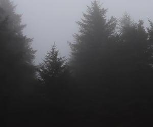 грусть, туман, and красиво image