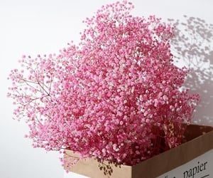 blooming, breath, and decor image
