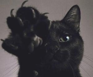 cat, black, and animal image
