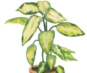 green, indoor plant, and plant image