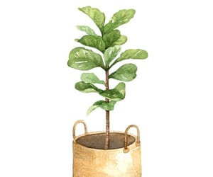 indoor plant, leaves, and small plant image