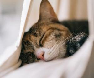 уют, мило, and кот image