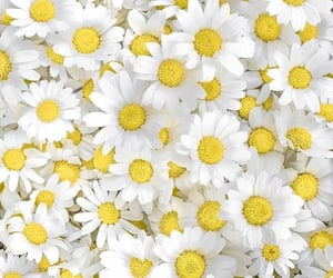flower, white, and yellow image