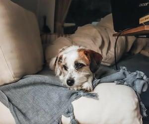 adventure, animal, and Caravan image