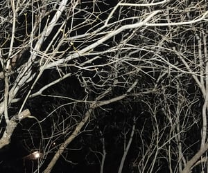 creepy, trees, and dark image