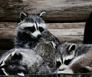 animal, famille, and kawai image
