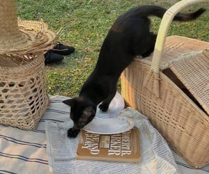 cat, aesthetic, and picnic image