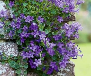 flowers and purple and green image