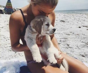 beach, dog, and friends image
