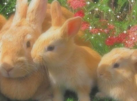 bunnies and garden image