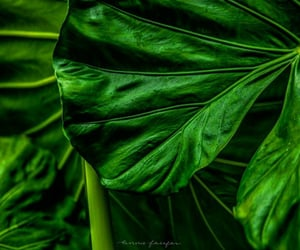 flora, green, and leaf image