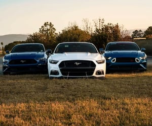 ford and mustang image