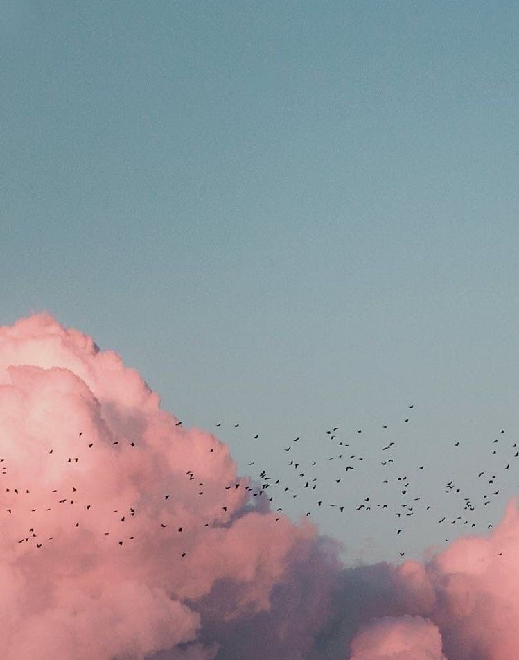 birds, clouds, and pink image