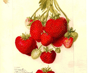 lithograph, red, and strawberries image