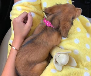 puppy, theme, and yellow image
