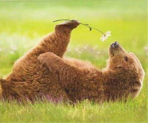 wild, animals, and nature image