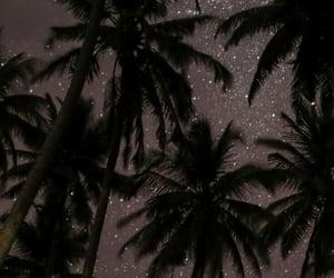 estrellas, palm, and sky image