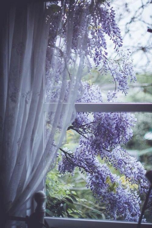 flowers, spring, and window image