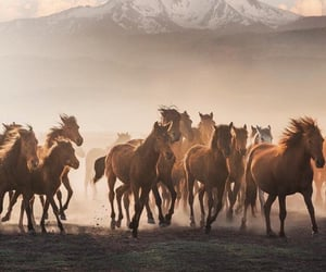 horse and حصان image