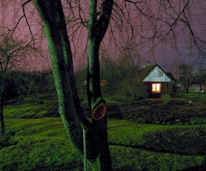 ClassicHorror, Contemporary Photography, and forest image