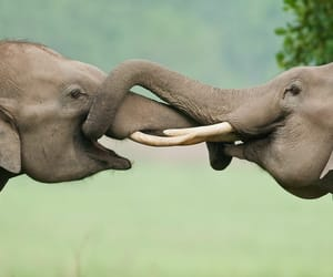 protect the innocent, stop torturing animals, and elephants are sacred image