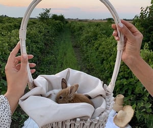 animals, love, and amazing image