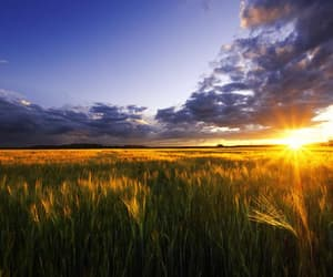 agriculture, summer, and wall art image