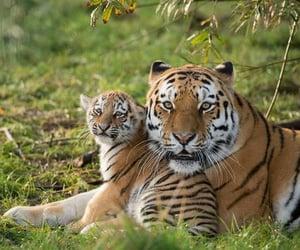 animal, foto, and photography image