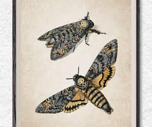 etsy, butterfly print, and antique prints image