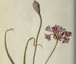 flower, leaves, and geo:state=washington image