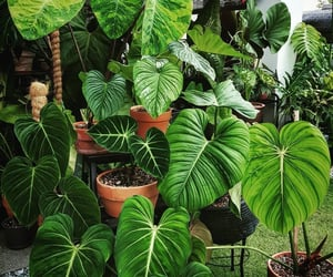 house plants, decoration plants, and shade plant image