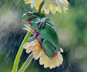 frog, flowers, and rain image