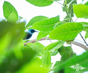 bird, leafy, and greenry image