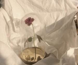 rose, aesthetic, and flowers image