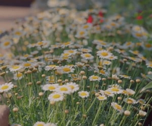 cinematography, daisy, and kdrama image