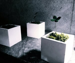 control, plant, and cube image